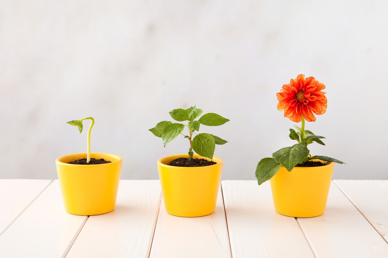 Three-stages-of-growth